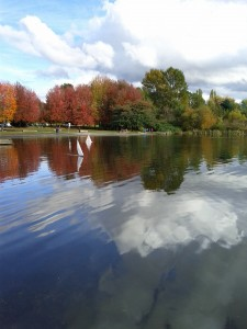 Boats on Trout Lake