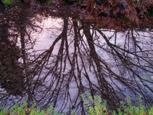 Tree reflections in Queen Elizabeth Park