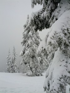 It looked like Narnia, Mt Seymour