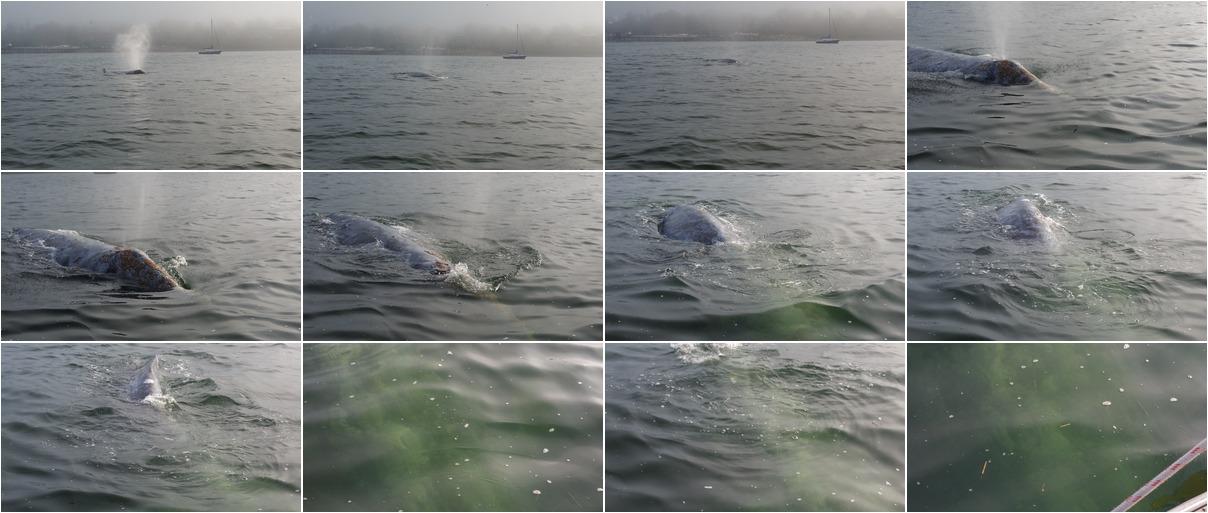 WhaleDive
